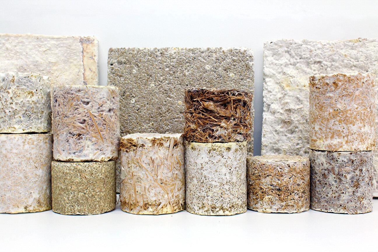 Hongos, ¿el material de construcción sostenible del futuro?